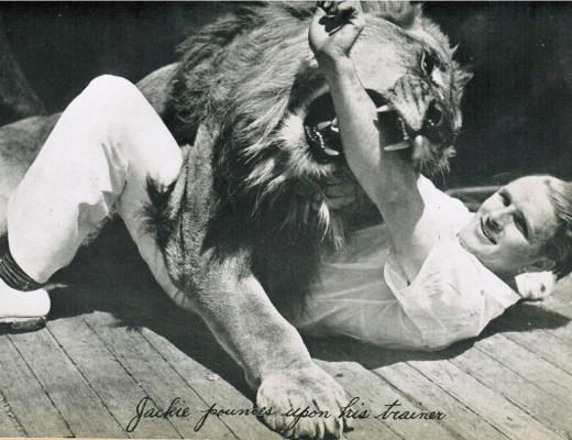 lionmanfight