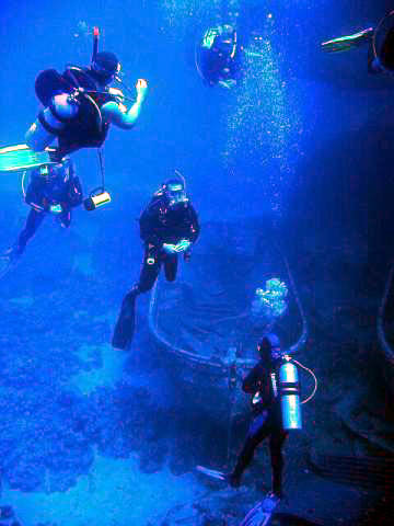 an analysis of the physics of scuba diving and the evolution of the scuba diving in the united state