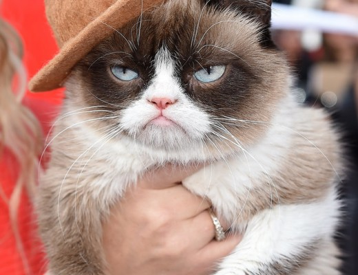 Grumpy-Cat-Pharrell-Hat-MTV-Movie-Awards-2014
