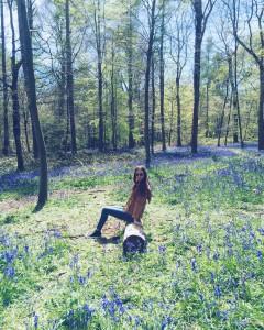 London bluebells in Whippendell Woods, Hertfordshire